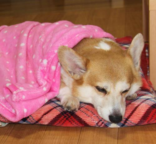 毛布でねんね