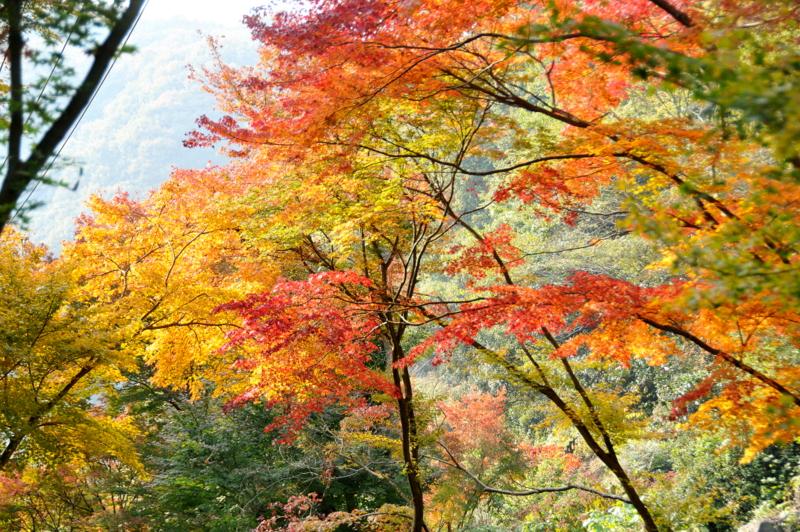 歌仙の滝 Ⅲ
