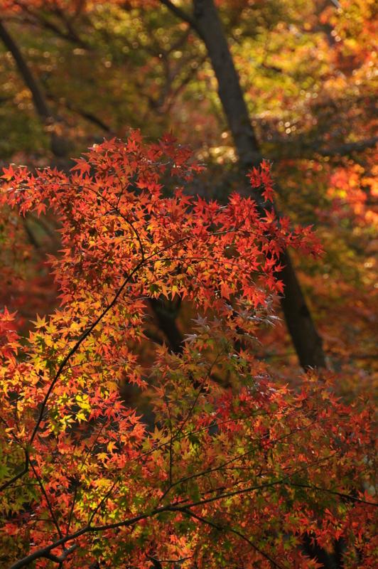 歌仙の滝2