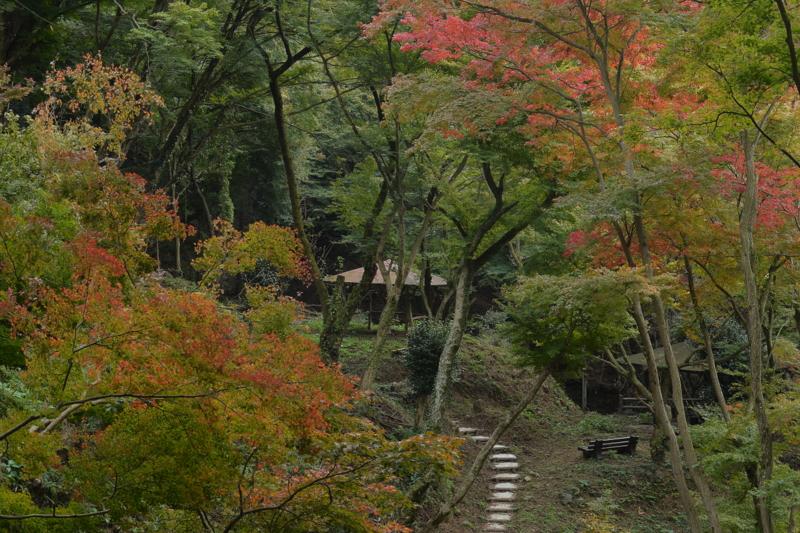 歌仙の滝紅葉