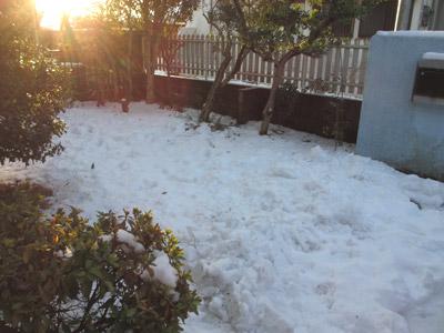 大雪の翌日の庭