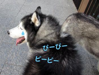 泣き虫ぽとふ