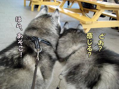 レーダー犬