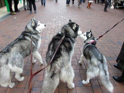 吉祥寺の街をお散歩