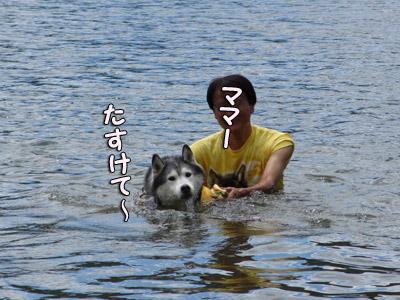トリュフの水遊び