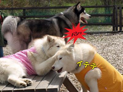 ルキアちゃんを殴るローズちゃん