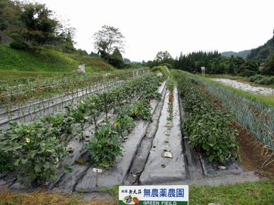 無農薬農園