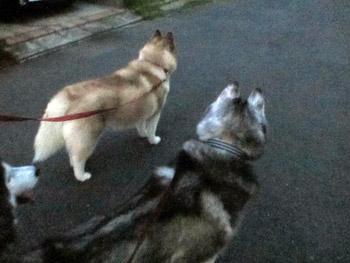 みんなでお散歩