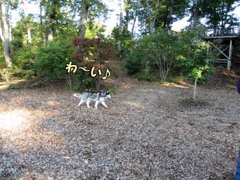 ドッグラン DOG Vacation