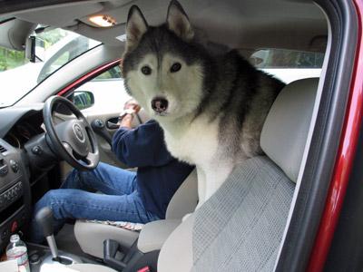 運転したいの?