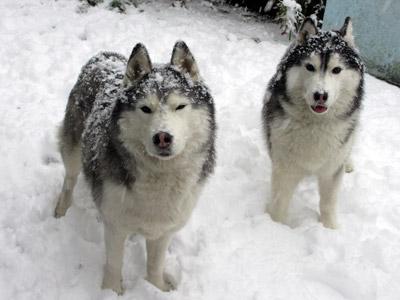 雪の中のおふたりさん