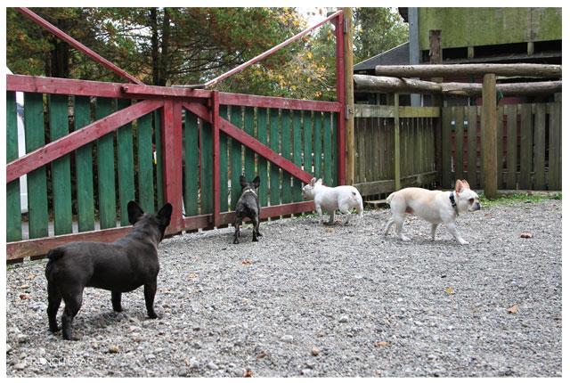 2012.11.3自由な犬