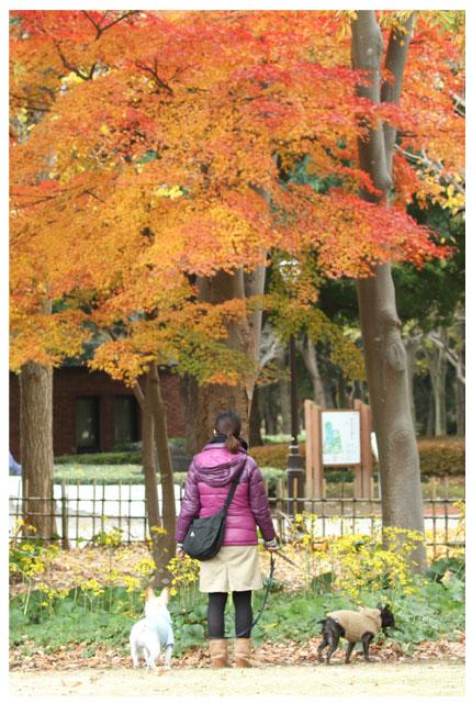 20121130公園②
