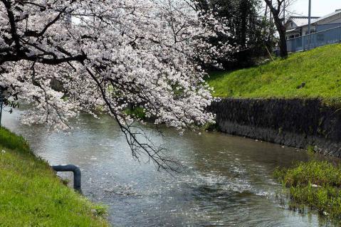 瀬古堀川20130330-4