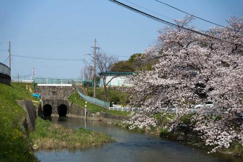 瀬古堀川20130330-1