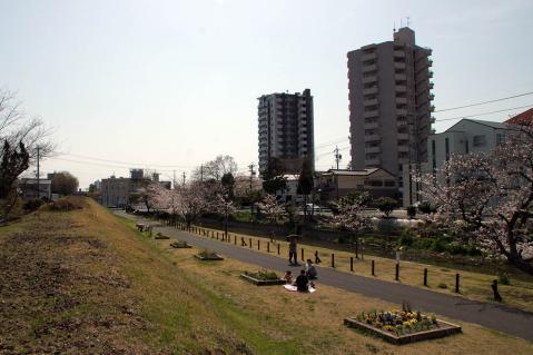 瀬古堀川20130330-3