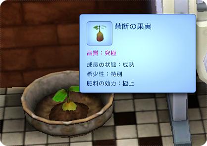 X45-33 禁断の果実の苗