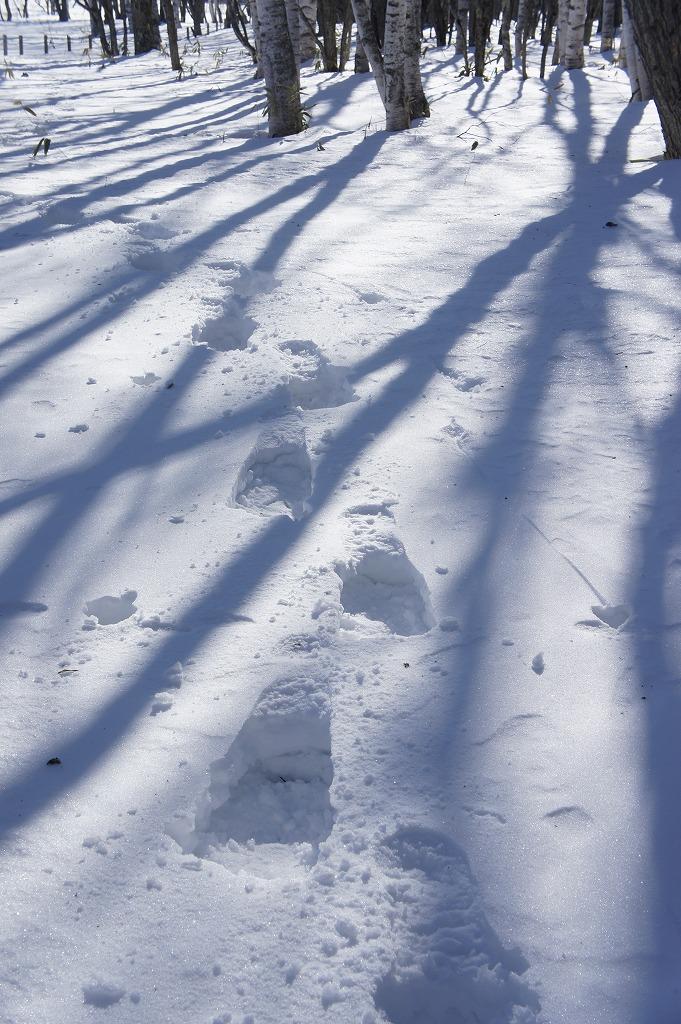 snowshoe03.jpg
