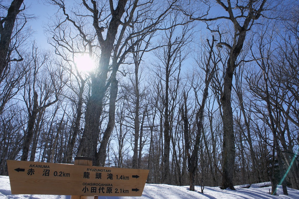 snowshoe04.jpg
