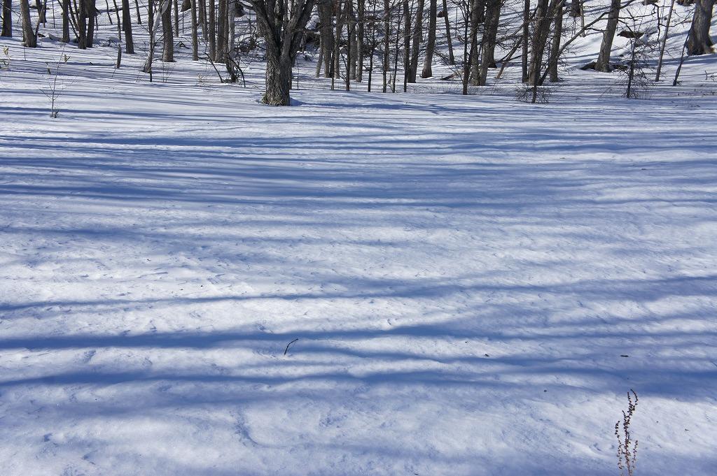 snowshoe05.jpg