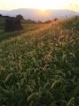 煌めく草原