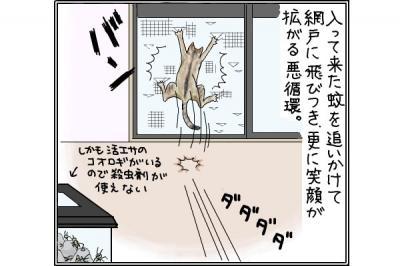 kaki_m_網戸4_convert_20141017203136