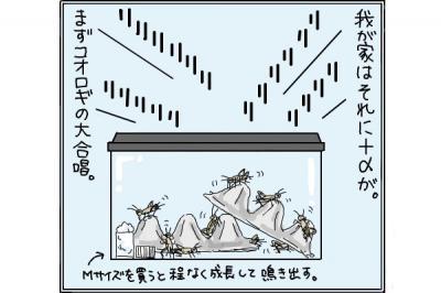 kaki_m_よふかし2_convert_20141021220829