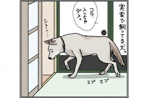 雑種犬1_convert_20141114201031