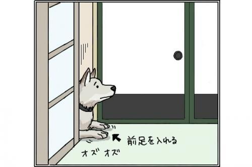雑種犬3_convert_20141114201107