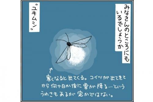 ユキムシ1_convert_20141118204828