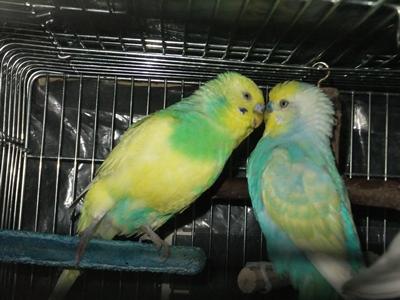 またまた、怪しい2羽