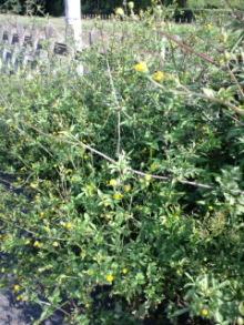 Innocent Garden-CA3G0220.jpg