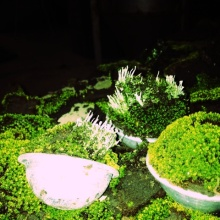 Innocent Garden  BOSS-image