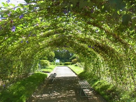 「9月9日の園芸植物園」
