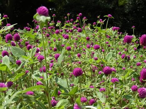 きれぎれの風彩 「花と緑の振興センター」04