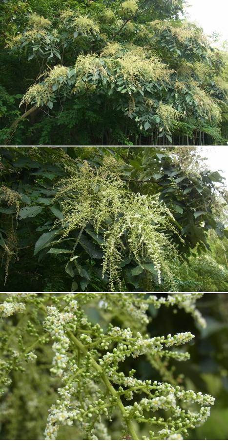 きれぎれの風彩 「秋葉の森~伊奈 9月」02