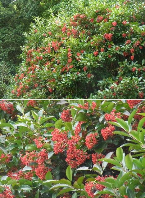 きれぎれの風彩 「秋葉の森~伊奈 9月」05