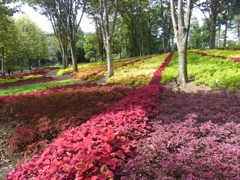「コリウス ~様々な色彩と模様の葉」
