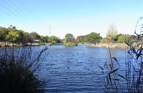 きれぎれの風彩 「見沼自然公園」