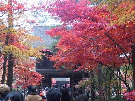 「平林寺の紅葉(1)-建物と紅葉」