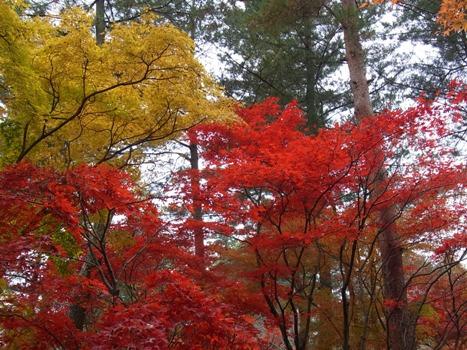 「平林寺の紅葉(1)-色とりどりの葉」