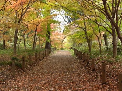 「平林寺の紅葉(1)-散策路」
