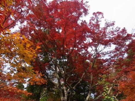 きれぎれの風彩 「平林寺の紅葉」1-16