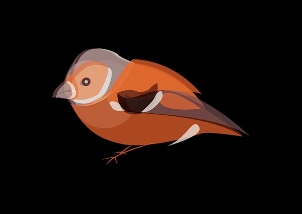 vector-art-bird