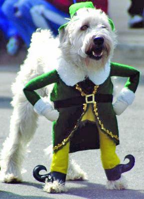 irish-dog-jig.jpg