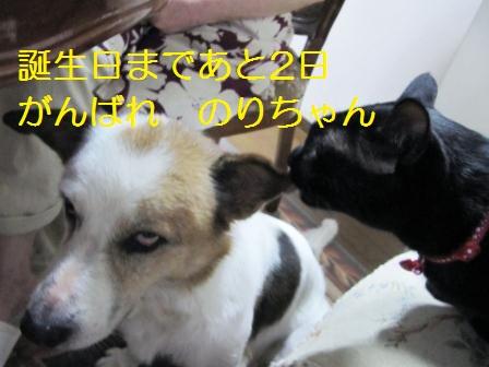 3IMG_2395^2