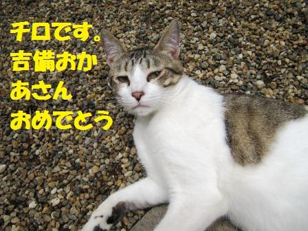 IMG_2408 ちろ