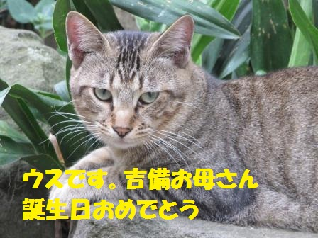 IMG_2407 うす
