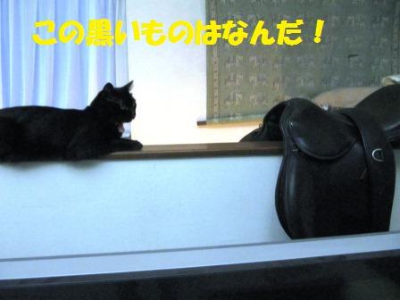IMG_2509 鞍 ミー太