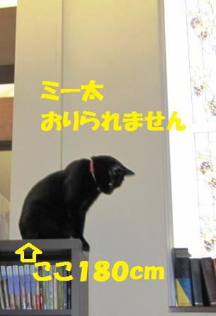 IMG_2524 honndana